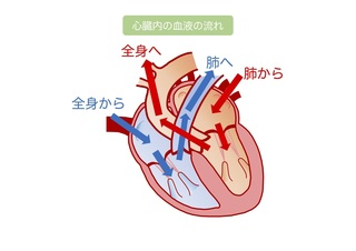 MR説明用血液の流れ.jpg
